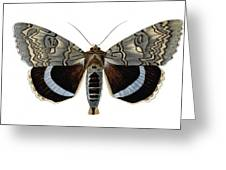 Blue Underwing Moth Greeting Card