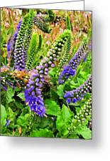 Blue Veronica Flowers   Digital Paint Greeting Card