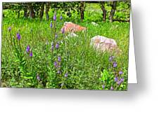 Blue Vervain And Rocks In Pipestone National Monument-minnesota  Greeting Card
