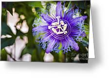 Blue Violet Greeting Card
