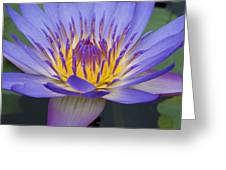 Blue Water Lily - Nymphaea Greeting Card by Heiko Koehrer-Wagner