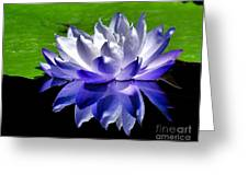 Blue Water Lily Reflection Greeting Card