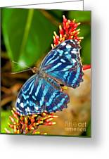Blue Wave Butterfly Greeting Card