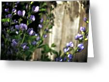 Blue Wild Indigo - Baptisia Australis Greeting Card