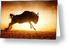 Blue Wildebeest Running In Dust Greeting Card