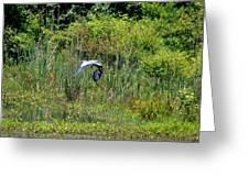 Blue Winged Heron 2013 Greeting Card