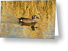 Blue Winged Teal 2 Greeting Card