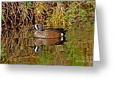 Blue-winged Teal Drake Greeting Card