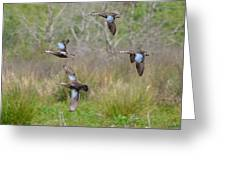 Blue Winged Teal Ducks In Flight Greeting Card