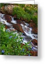 Bluebell Creek Greeting Card