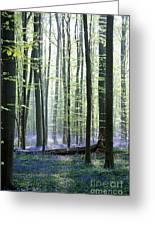 Bluebell Forrest 1 Greeting Card