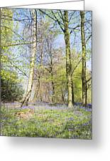 Bluebell Time In England Greeting Card