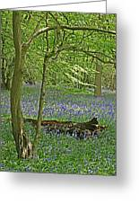 Bluebell Wood 1 Greeting Card