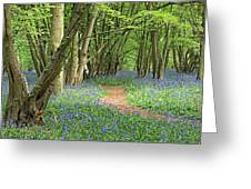 Bluebell Wood 3 Greeting Card