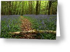 Bluebell Woods Greeting Card by Peter Skelton