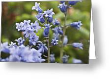 Bluebells 2 Greeting Card