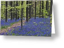 Bluebells In Beech Forest Greeting Card