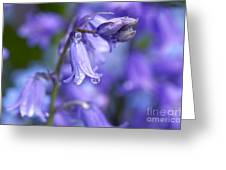 Bluebells After The Rain 2 Greeting Card
