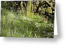Bluebells And Greater Stitchwort Spring  Boot Eskdale Cumbria England Greeting Card