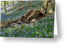 Bluebells At Bransdale Greeting Card