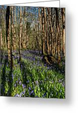Bluebells In May Greeting Card