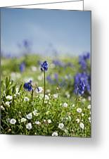 Bluebells In Sea Campion Greeting Card