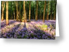 Bluebells In Shadows Greeting Card