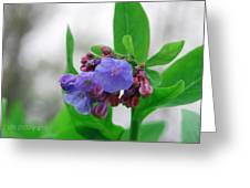 Bluebells In The Rain Greeting Card