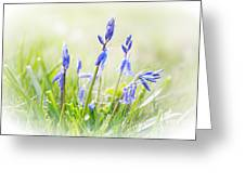 Bluebells On The Forest Greeting Card