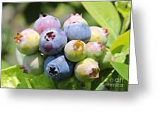 Blueberries Closeup Greeting Card
