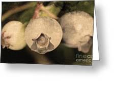 Blueberries On Bush Sepia Tone Greeting Card