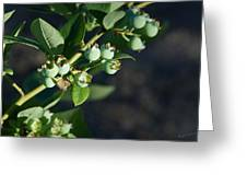 Blueberry Branch Greeting Card