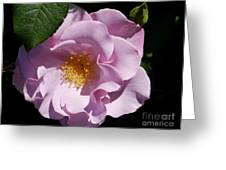 Blueberry Hill Greeting Card