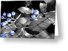 Blueberry Magic Greeting Card