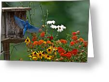 Bluebird And Colorful Flowers Greeting Card