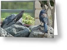 Bluejay And Mockingbird Greeting Card