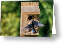 Bluebird At Nest Greeting Card