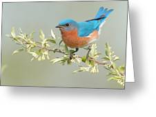 Bluebird Floral Greeting Card