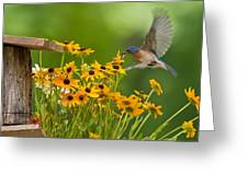 Bluebird Flying Over The Black Eyed Susans Greeting Card