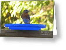 Bluebird Frisbee Greeting Card