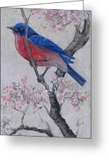 Bluebird In Cherry Blossoms Greeting Card