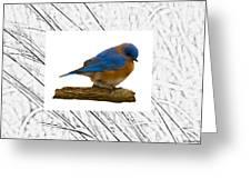 Bluebird In Prairie Frame Greeting Card