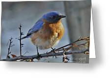 Bluebird In The Snow. Greeting Card