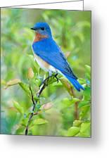Bluebird Joy Greeting Card