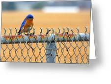 Bluebird On A Fence Greeting Card
