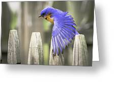 Bluebird On The Fence Greeting Card