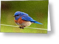 Bluebird  Painting Greeting Card by Jean Noren