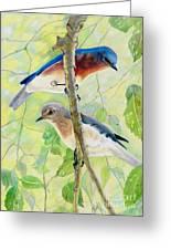Bluebird Pair Greeting Card