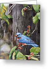Bluebird - Red Berries Greeting Card