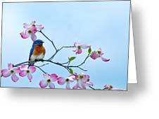 Bluebird Visits Red Dogwood Greeting Card